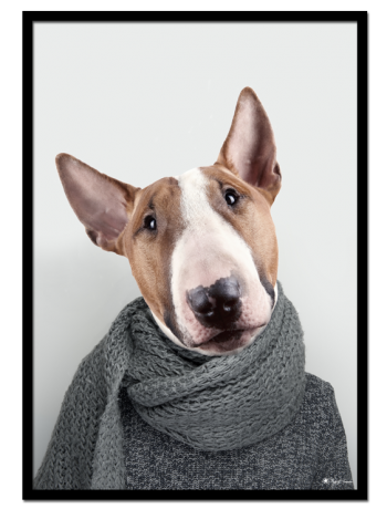 Bill the Bull Terrier poster | Cute Bull Terrier head on a male body with scarf.