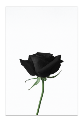 Black Rose – Art Card
