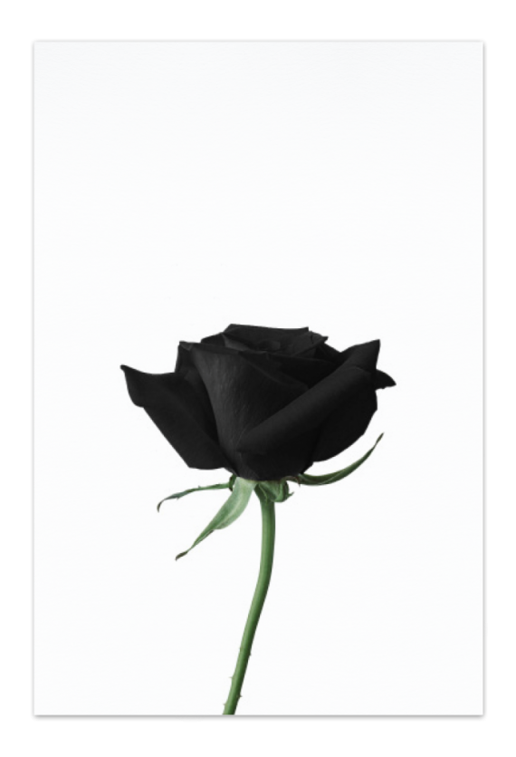 Black Rose Art Card | Art doesn't have to be big to make a big impression. Our art cards are about the size of postcards, but they'll brighten up any room with their eye-catching designs. With a selection of unique art work printed on high quality paper, these are a versatile type of art for all sorts of occasions.