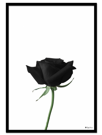 Black Rose poster | Minimalistic print of a black rose.