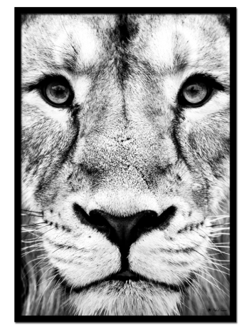 "Lion poster | Black and white poster of a lion face. Combine with ""Puma"" and ""Tiger"" for the perfect gallery look."