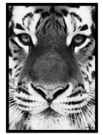 "Tiger poster | Black and white poster of a tiger face. Combine with ""Lion"" and ""Puma"" for the perfect gallery look"