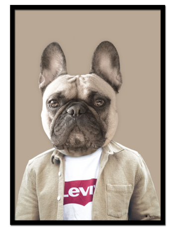 "Frankie The Bulldog poster | Poster of a french bulldog in a shirt and Levis t-shirt. Match with ""Bill The Bull Terrier""."