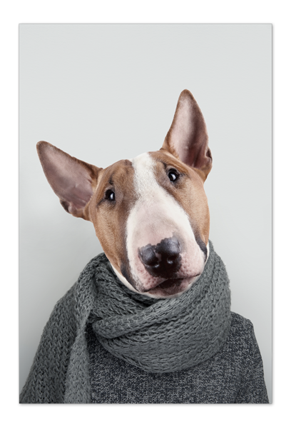 Bill the Bull Terrier Art Card | Art doesn't have to be big to make a big impression. Our art cards are about the size of postcards, but they'll brighten up any room with their eye-catching designs. With a selection of unique art work printed on high quality paper, these are a versatile type of art for all sorts of occasions.