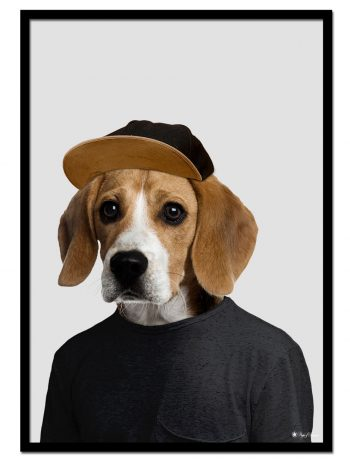 Joey the Beagle