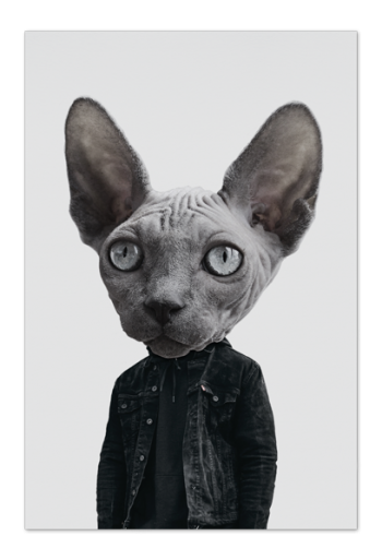 Mr. Sphynx – Art Card