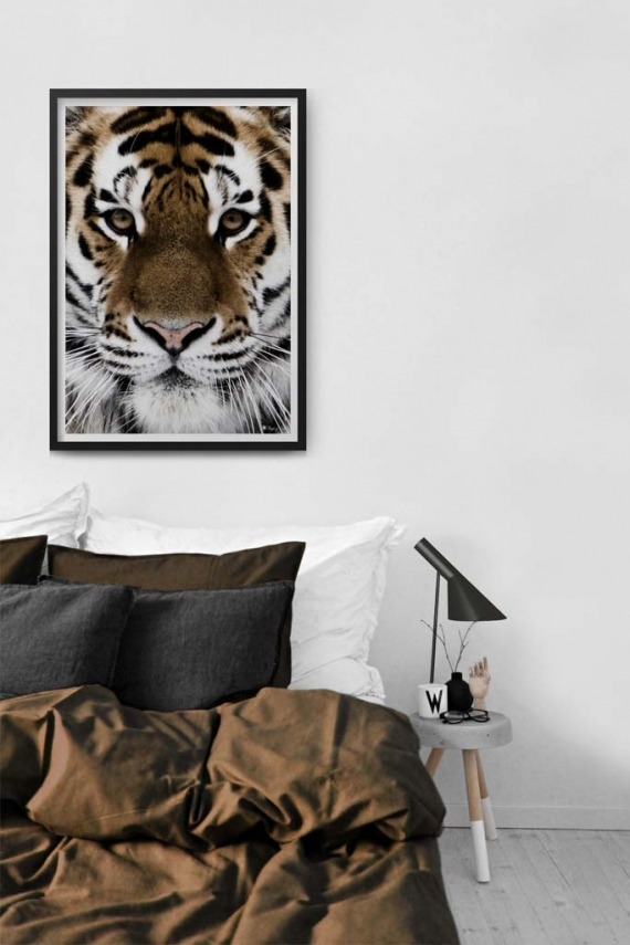 Tiger Face poster |Beautiful poster of a tiger's face.