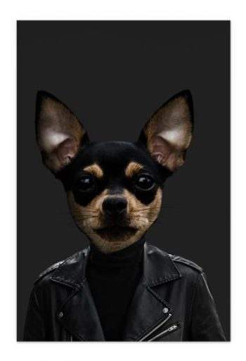Tito the Chihuahua – Art Card