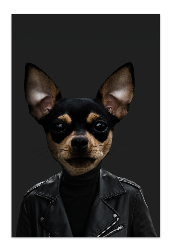 Tito the Chihuahua Art Card |Art doesn't have to be big to make a big impression. Our art cards are about the size of postcards, but they'll brighten up any room with their eye-catching designs. With a selection of unique art work printed on high quality paper, these are a versatile type of art for all sorts of occasions.
