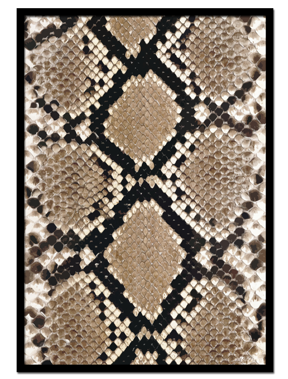 Snakeskin poster | Digital painting of snakeskin pattern.