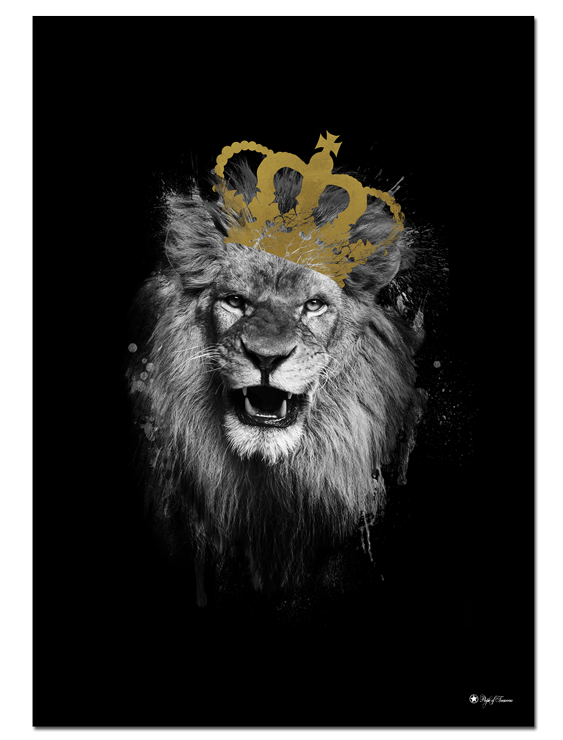 Royal Lion poster | King of the jungle on matte black background! This majestic animal serves well as an eye-catching object in any room.