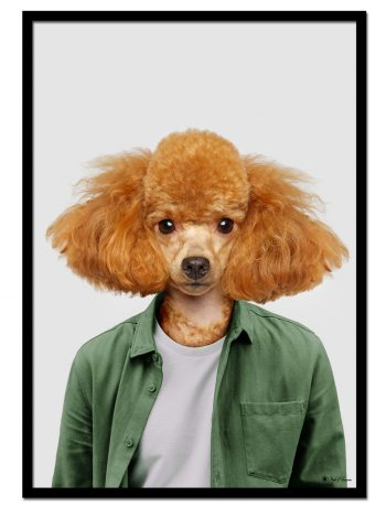 Marty The Poodle